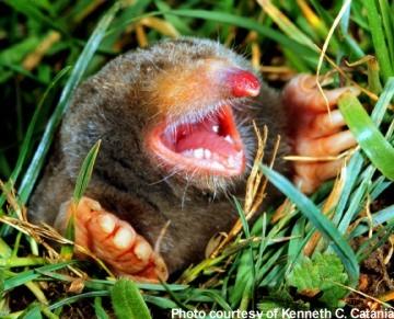 The Mole Wer Ist Rausgeflogen
