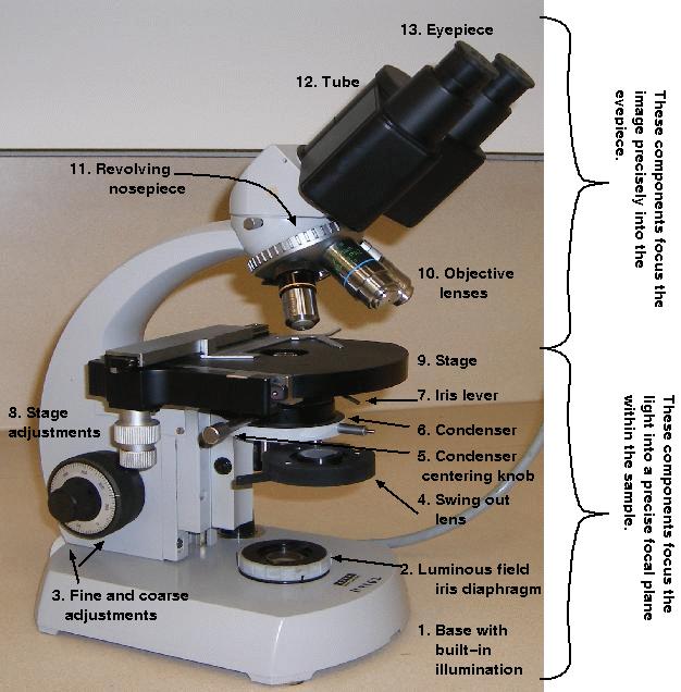 microscope coarse adjustment knob function