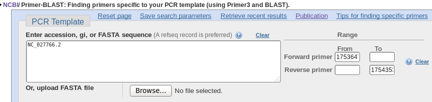 BIRCH - Designing PCR primers to amplify a gene from genomic DNA